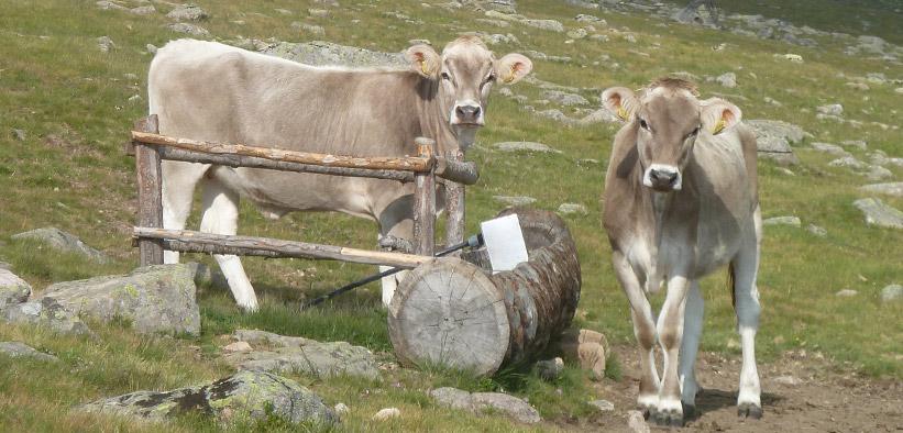 Calendario Aste Bolzano.Sito Ufficiale Federazione Provinciale Di Allevatori Di